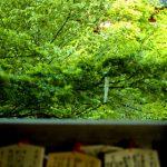 清水寺の緑