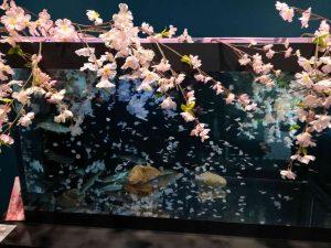 マリホ水族館春の水槽